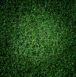 The grass сlose-up. Stock Image