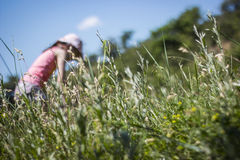 Grass low angle view, girl in the background blurred. Against blue sky Stock Photos