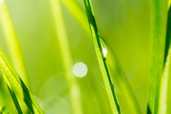 Grass, low depth of focus Stock Image