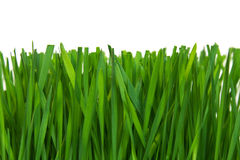 Grass macro Stock Photography
