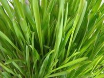 grass macro Zdjęcia Stock