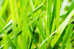 Grass macro Stock Photos