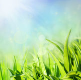 Grass macro background Stock Photo