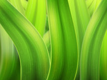 Grass macro background Stock Images