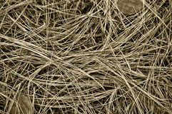 Long grass. Grass macro black and white backgrounds vegitation ovrview field texture season fall plant environment  western cowboy fodder Stock Image