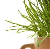 Grass macro natural background Stock Photo