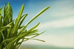 Grass macro natural background Stock Image