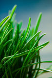 Grass macro natural background Stock Images