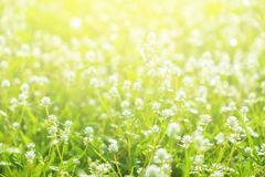 Grass and Maedow in the Garden Morning. Beautiful Nature Backgro. Und Stock Photo