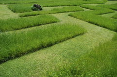 Grass maze 2 Royalty Free Stock Images