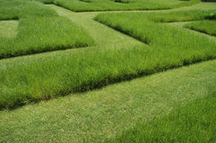 Grass maze. A maze cut into some long grass Royalty Free Stock Image