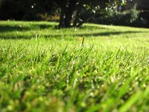 Grass in meadow Royalty Free Stock Photography