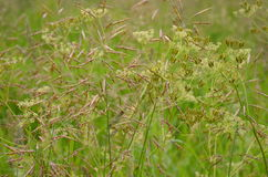 Grass in the meadow Stock Image