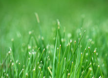Grass in meadow Royalty Free Stock Image