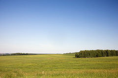 Grass meadow. And blue sky Stock Image