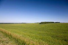 Grass meadow. And blue sky Stock Photo