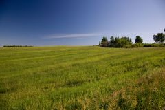 Grass meadow. And blue sky Royalty Free Stock Photo