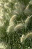 Grass meadow Stock Photo