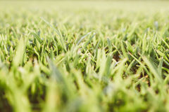 Grass meadow background Stock Images