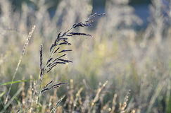 Grass an meadow background Royalty Free Stock Photo