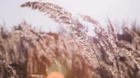 Grass on the meadow. Beautiful autumn. stock footage