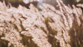 Grass on the meadow. Beautiful autumn. stock video footage