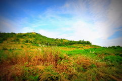 Grass Meadow and Blue Sky. Vignette-style photo of a blue sky and grass meadow on an island near Pattaya, Thailand royalty free stock photography