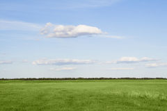 Grass meadow, the blue sky and white clouds Royalty Free Stock Photography