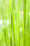 Grass on meadow Stock Photography