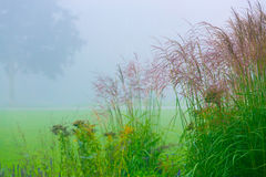 Grass meadow in the early morning Stock Photos