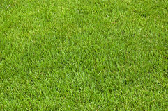 Grass on meadow Royalty Free Stock Photo