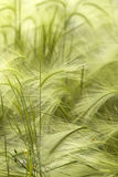 Grass meadow steppe Stock Image