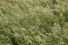 Grass on a meadow Stock Photos