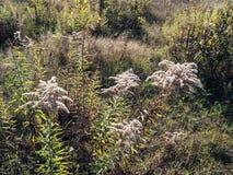 Grass meadow Royalty Free Stock Photos
