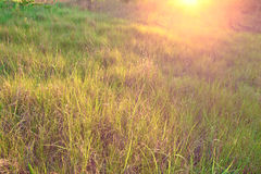 Grass Meadow Stock Image
