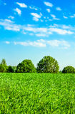 Grass meadow and trees under the blue sky Royalty Free Stock Photography
