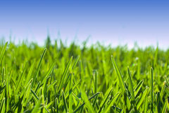 Grass meadow under blue sky Stock Photo