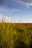 Grass at Meadow under Blue Sky Stock Images