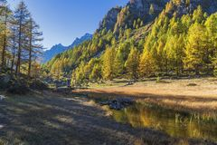 Alpe devero autumnal mountain landscape. Grass meadows growing on a water pond with nice reflections inside the Alpe Devero flat land royalty free stock images