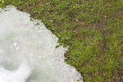 Grass and melting snow Stock Photo