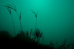 Grass in mist. And some green effect in kemmannugundi, Karnataka Royalty Free Stock Photo