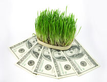 Grass and money Stock Images