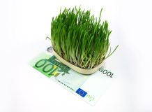 Grass and money Royalty Free Stock Photo