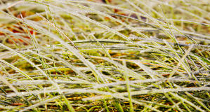 Grass in a morning. Stock Photo