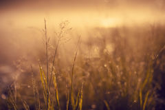 Grass. Morning grass with clean water droplets Royalty Free Stock Photos