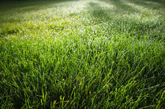 Grass with morning dew drops Stock Photos