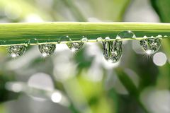 Grass with morning dew in spring. Drops of water hanging from the blade of grass in the early morning, spring Stock Image