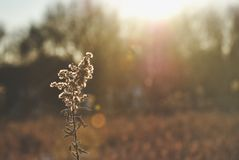 Grass in the morning light. Sunrise over the tress shining a bright gold Stock Image