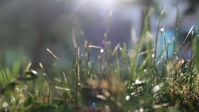 Grass and a morning rain stock footage