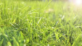 Grass in the morning stock footage